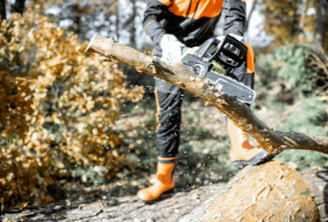 A worker safely uses a chainsaw to cut a large branch off of a fallen tree